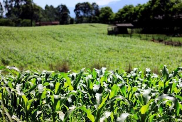 agricultura milho 2